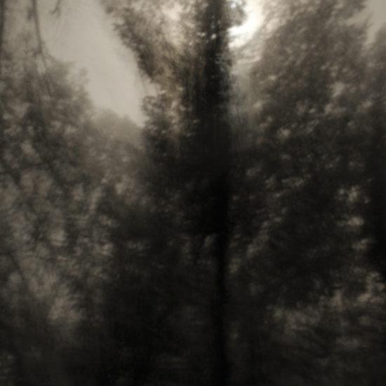 Sorthvide-billeder-nat-månelys