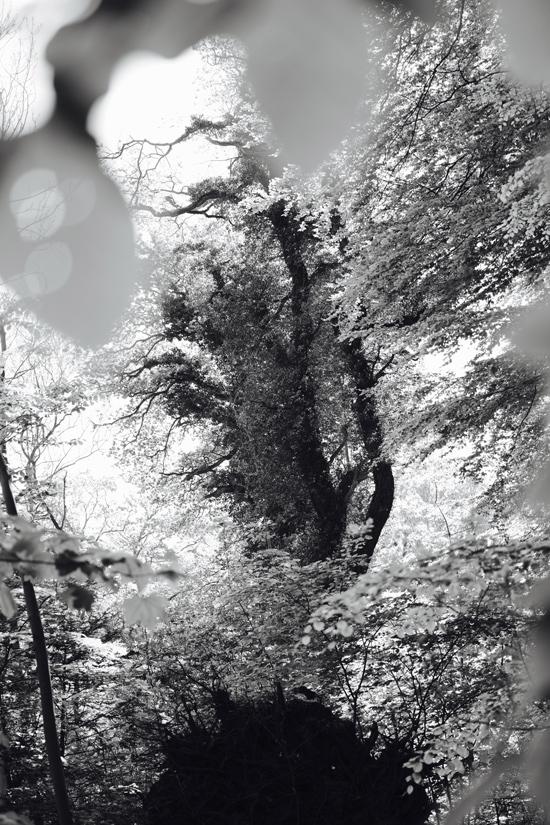S/H-Billeder-af-Skov-natur